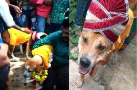 अनोखी शादी:  बैंडबाजे के साथ निकली कुत्ते की बारात, सात फेरों के बाद हुई शादी, VIDEO