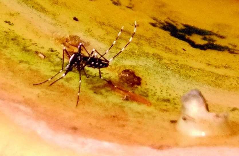 Uttarakhand: सीएम बोले- उत्तराखंड में 'ये' छोड़ रहे मच्छर, जिससे जा रही लोगों की जान