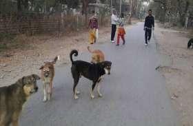जरा सी गफलत और बढ़ गई आवारा कुत्तों की संख्या