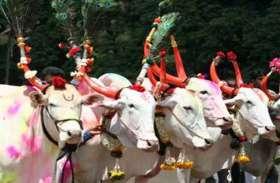 पोला पर्व आज, बैलों का श्रृंगार कर किसान करेंगे पूजा