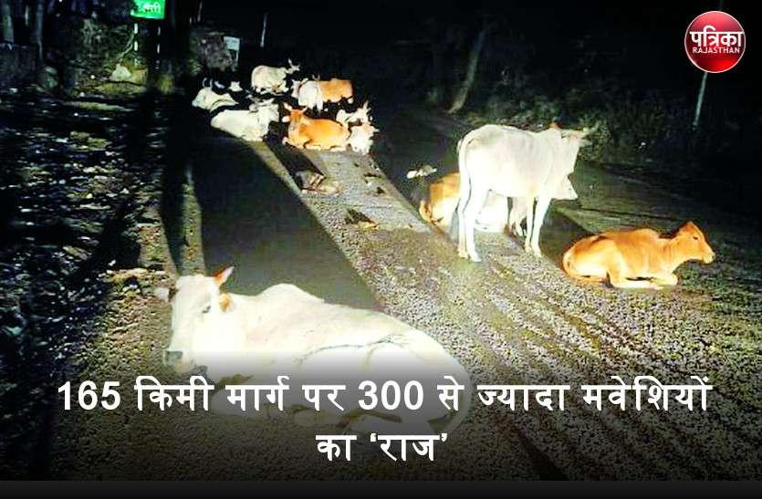 स्टेट हाइवे 32 पर उदयपुर से बांसवाड़ा तक का जोखिम भरा सफर, 165 किमी मार्ग पर 300 से ज्यादा मवेशियों का 'राज'