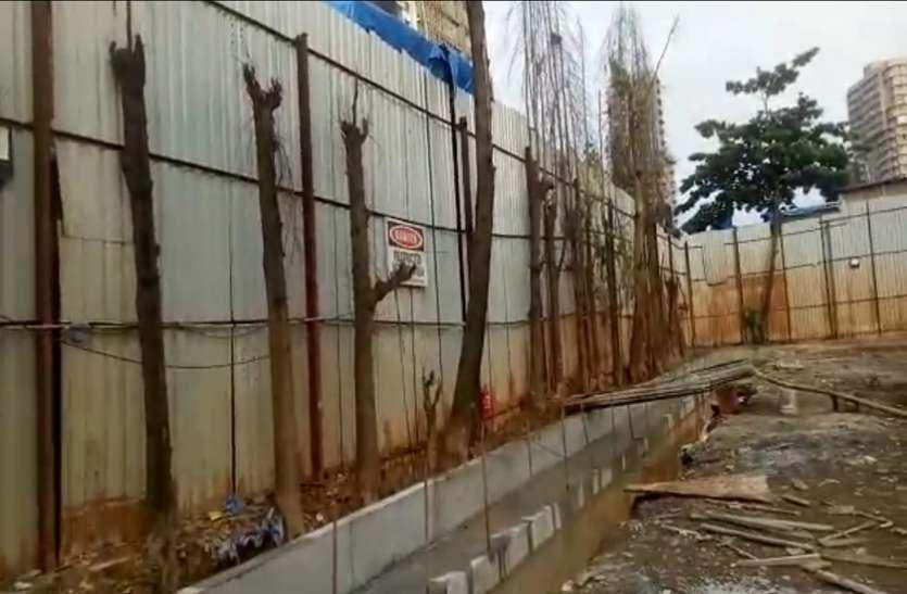 PATRIKA EXPOSE : पेड़ सुखाने के लिए हरे-भरे पेड़ों की जड़ में भरा गया जहरीला रसायन