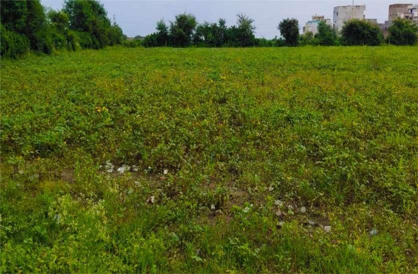 बारिश से फसलें प्रभावित,  झड़ने लगी फूल और फल्लियां