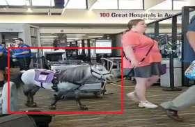इमोशनल सपोर्ट के लिए महिला ने उठाया ये कदम, प्लेन में पहुंची घोड़ा लेकर