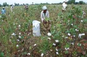 Agriculture: एक बार फिर छिंदवाड़ा जिले मेें बनेगा एक खास रेकॉर्ड