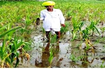 कृषि वैज्ञानिकों ने पीला मोजेक से बचाव के दिए सलाह, कहा-इस तरह से करेंगे खेती तो फसलों में नहीं लगेंगे रोग