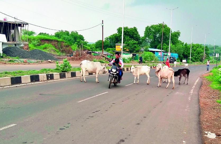 प्रदेश के इस जिले गायों की सुरक्षा के लिए धारा 144 लागू