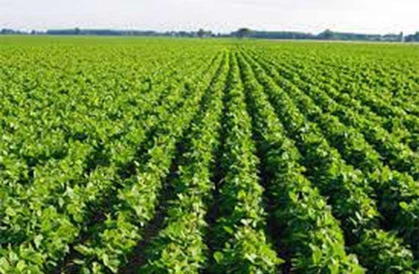 एप की मदद से पैदावार बढ़ाने के साथ ही कमाई भी कर रहे किसान
