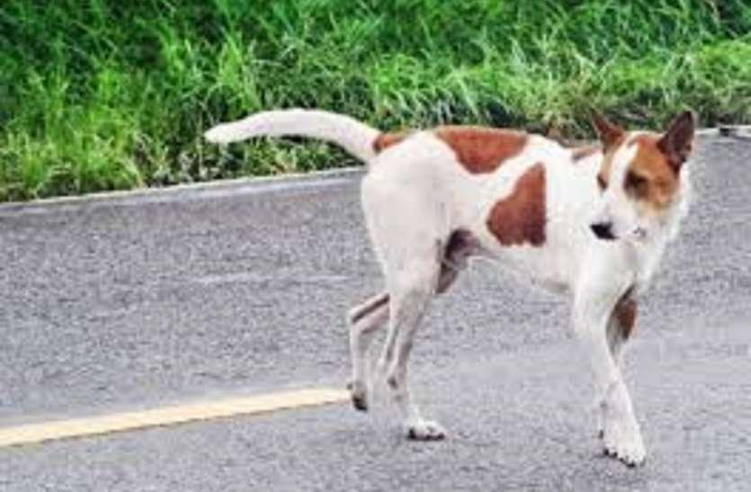 टिफिन के पैसे से घायल कुत्ते का इलाज कराने पहुंचे स्कूली बच्चे