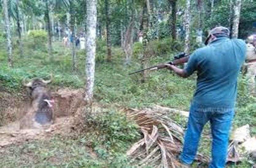 Forest dept: ना ट्रेंकूलाइजर गन मिली, ना स्टाफ को हथियार