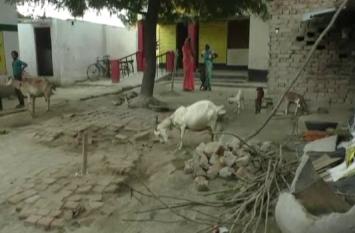 देखो सरकार, ये स्कूल बना तबेला, छात्रों के पठन पाठन में खलल डालती है बकरियां