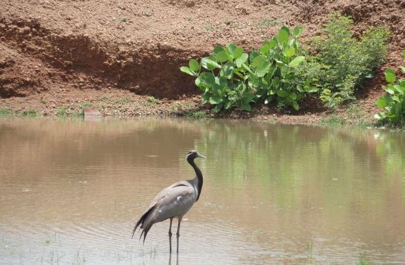 मेहमान पक्षियों ने आसमान की ऊचाईयां से दी दस्तक, दिनभर हुई जांच पड़ताल