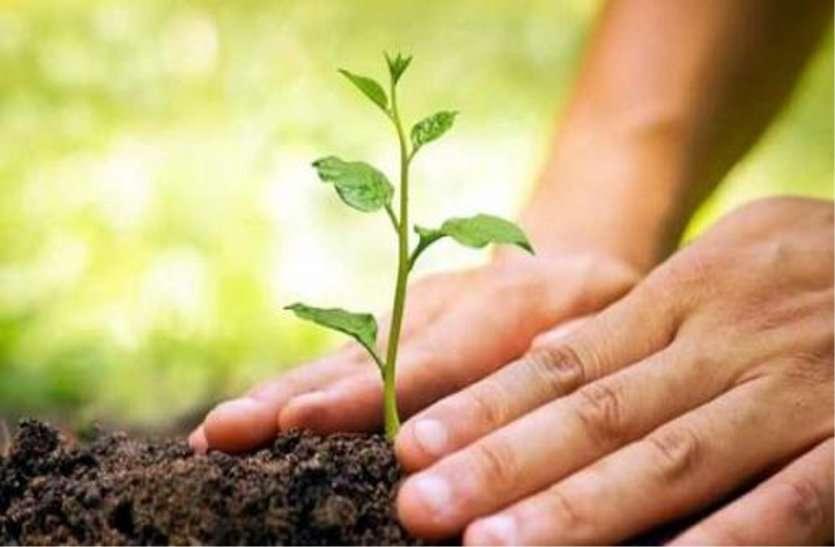 दो सौ हेक्टेयर जमीन पर रोपे जाएंगे पौधे, तैयार होगी नर्सरी