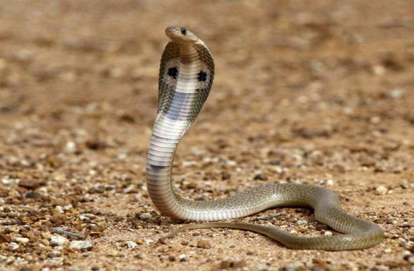 snake_bite.jpg