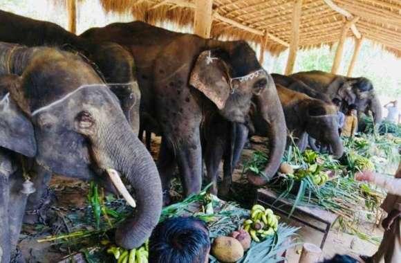 दुधवा में हाथियों की हुई शानदार पार्टी