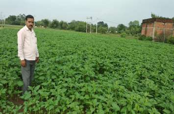 किसान की मेहनत लाई रंग, चार एकड़ बंजर भूमि में दलहन-तिलहन की खेती कर बनाया रिकार्ड, खीरा, मक्का की उपज से ले रहे लाखों की आमदनी