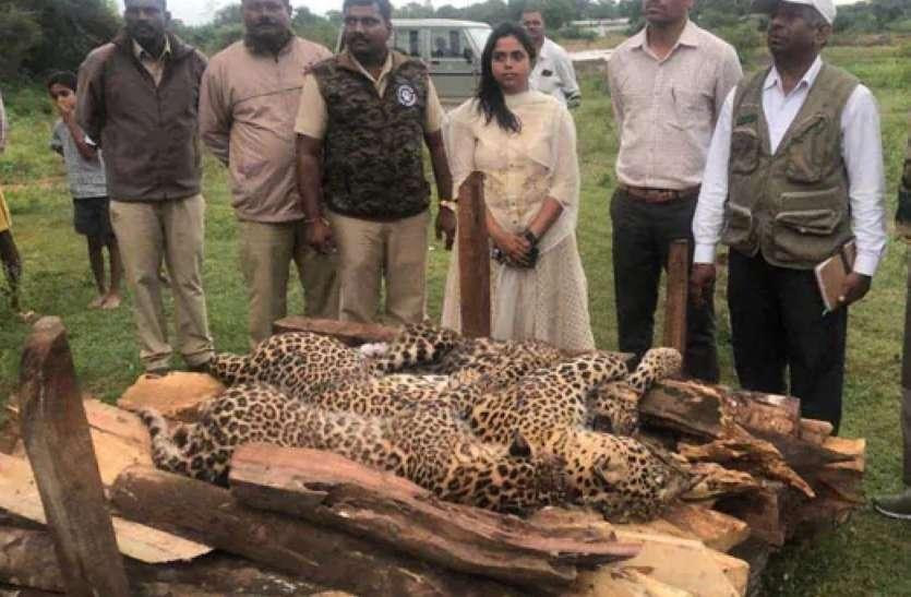 मैसूरु : मादा तेंदुआ और दो शावकों के शव मिले