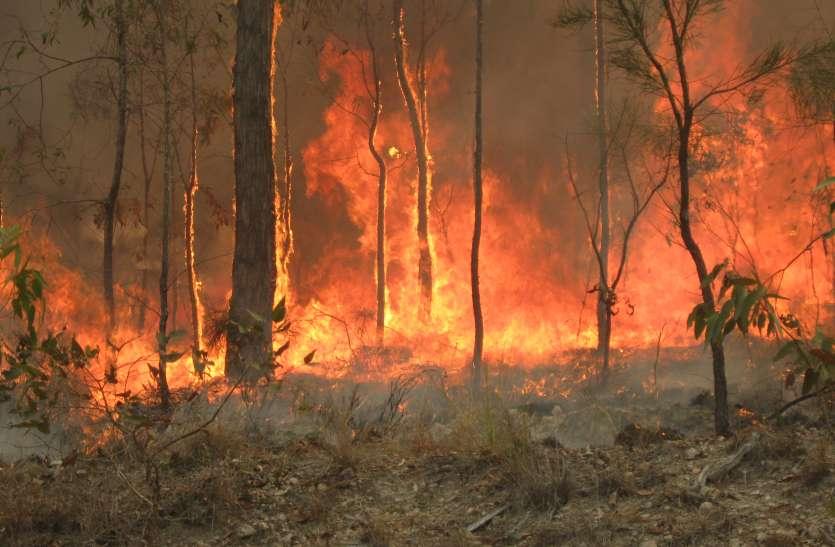 क्वींसलैंड में लगी आग के मामले में बड़ा खुलासा, आठ घटनाओं में किशोरों का हाथ
