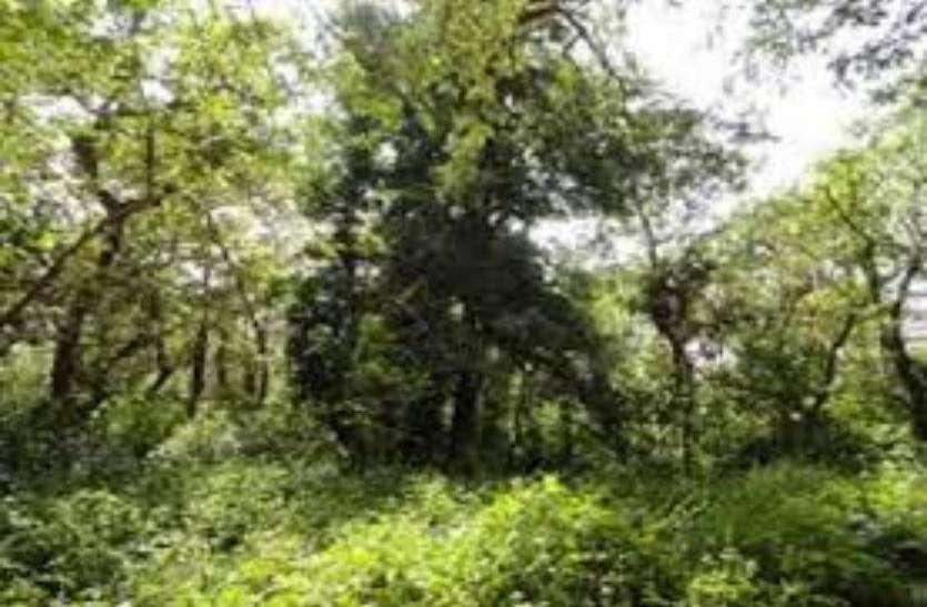 हाईटेक सिटी के बीच जापानी विधि से बसाया जाएगा जंगल, यह है वजह- देखें वीडियाे