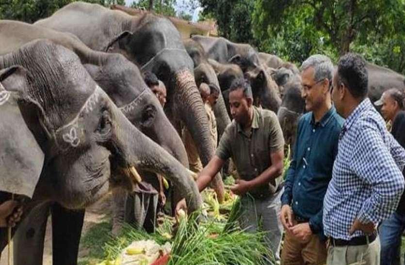 बिगड़ैल बाघों को काबू करेंगे कर्नाटक के हाथी, हाथियों से होगी दुधवा पार्क की पेट्रोलिंग