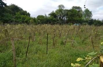 rainfall : भारी बारिश ने मचाई तबाही