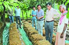 नई तकनीक से किसान ने किया मशरूम उत्पादन, राष्ट्रीय स्तर पर किया गया सम्मानित