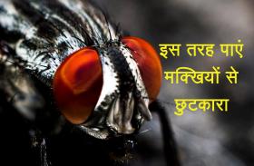 बारिश में मक्खियों से हैं परेशान तो एक बार ज़रूर आज़माएं ये उपाय