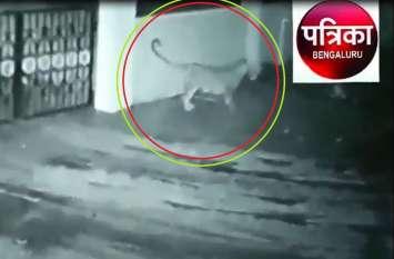 VIRAL VIDEO : तेंदुआ घर में खड़ी कार की ओट लेता है फिर कुत्तेे को जाकर दबोच लेता है...बाल बाल बचे परिवार वाले