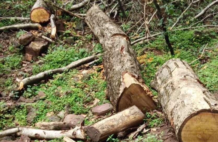 सकरिया जंगल में काट दिए गए सैकड़ों हरे पेड़, पूर्व सांसद ने जिला प्रशासन से की शिकायत