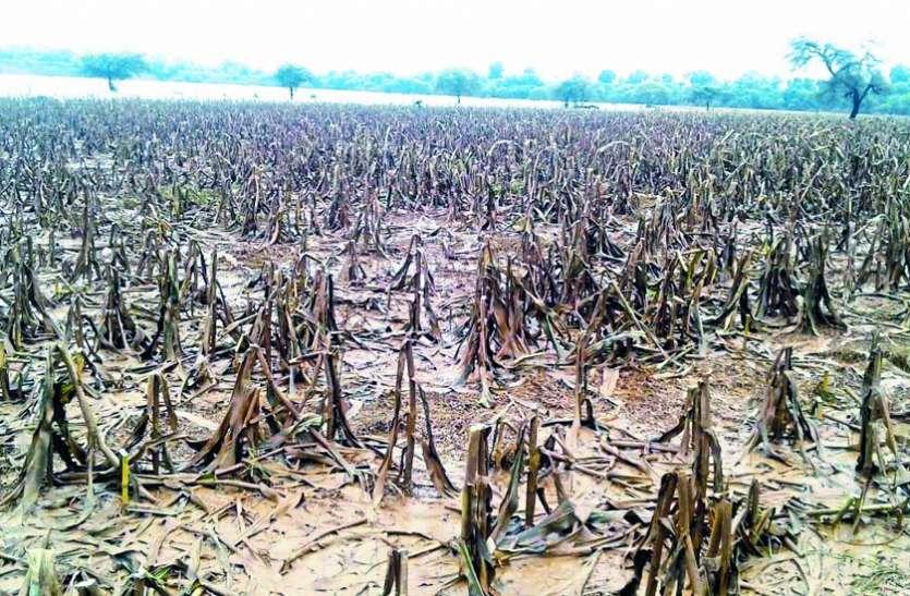 नर्मदा किनारे के 23 गांवों के किसानों के सामने हो गया संकट, जानें क्यों