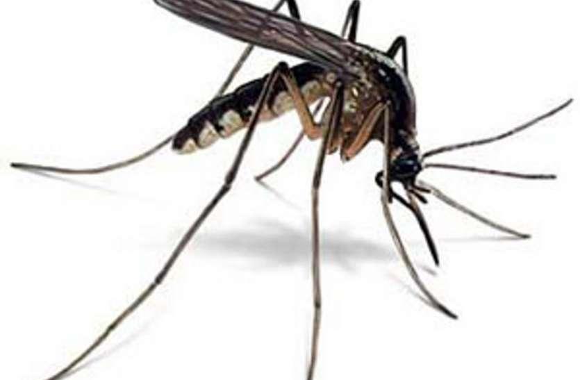 मच्छर की मार झेल रही शहरी आबादी, वीआईपी कालोनी तक सिमटी फोगिंग व्यवस्था