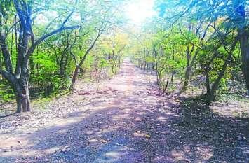 40 करोड़ का बाइपास वन विभाग को पौधरोपण के लिए जमीन नहीं मिलने के कारण अधर में