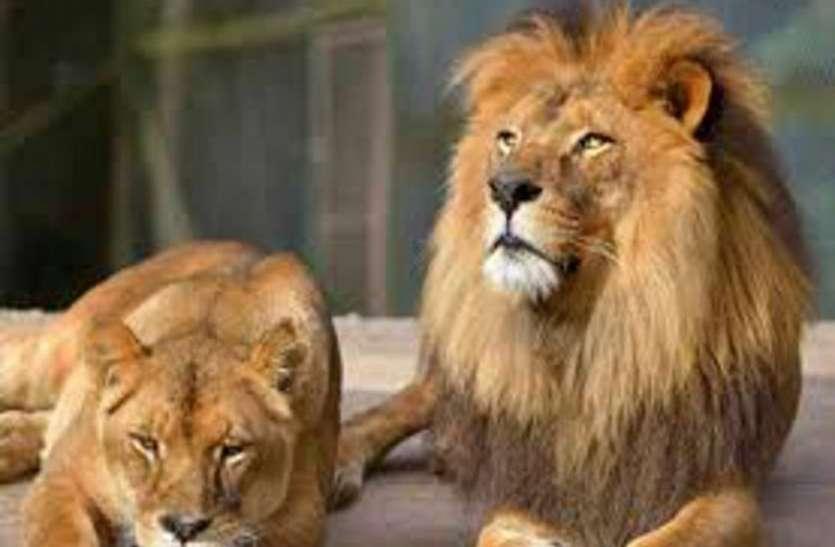योगी की गुफा में दहाड़ेंगे गुजरात के शेर