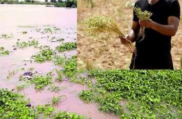 पानी में डूबी फसलें, किसानों के सामने रोजी-रोटी का संकट, किसान संघ ने की मुआवजे की मांग