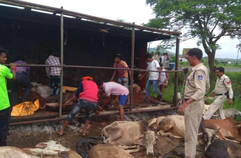 Smuggling of Cattle: गोशाला में है क्षमता से अधिक गोवंश, अब और कहा रखे