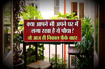 क्या आपने भी अपने घर में लगा रखा है ये पौधा? तो आज ही निकाल फेंके बाहर