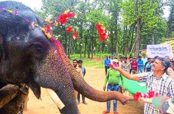 सीधी में हाथी महोत्सव का समापन: अब संजय टाइगर रिजर्व का हिस्सा बनेगी मादा हाथी 'चित्रा