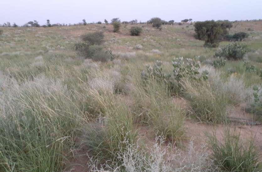 अमेरिकन सेटेलाइट 8 ने बताया कि छत्तीसगढ़ के इस जिले का 160 वर्ग किमी दायरा हो गया है मरुस्थल