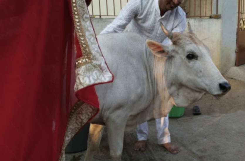 केवल 2200 रुपए करिये खर्च, तो सिर्फ बछिया ही पैदा करेगी आपकी गाय, हुआ बड़ा कमाल