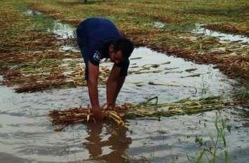 अंधड़-बारिश के निशां बाकी : आड़ी बिछ गई फसलें, खेतों में भरा पानी