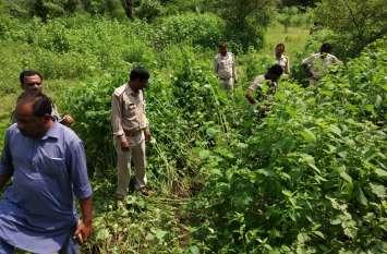 वन विभाग से गायब हो गई 2600 पेड़ों की लकड़ी