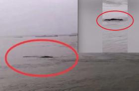 लोगों ने नदी में देखी काली चीज बताया पानी वाला राक्षस, लेकिन सच्चाई जान हर कोई हैरान रह गया