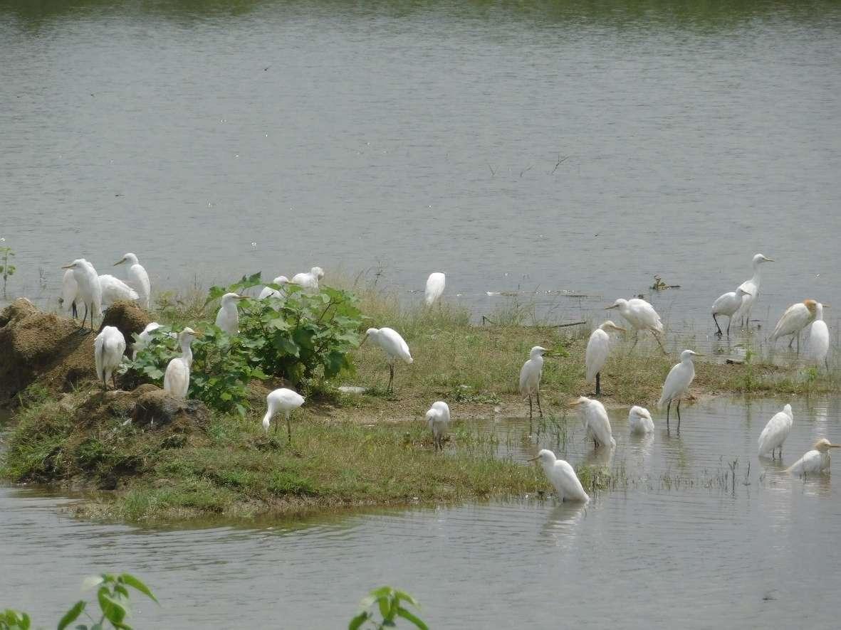 Heron birds gathered in the arrangement of food