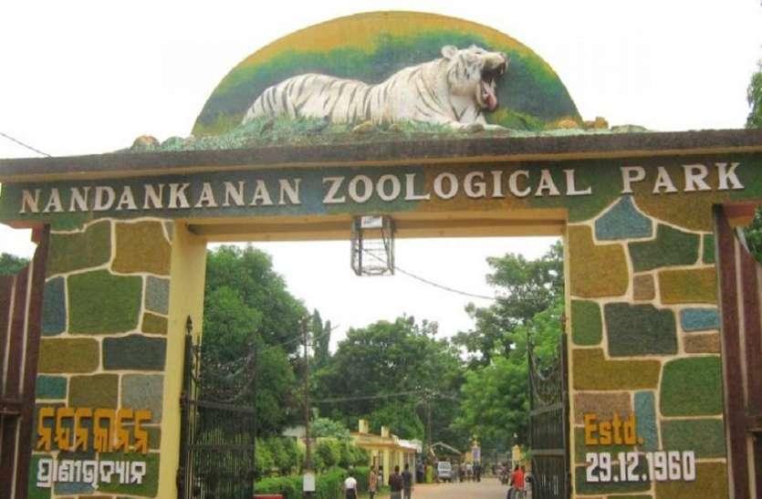 NandanKanan: 25 दिन में चार हाथियों को लील गया हरपीज, तीन मरणासन्न