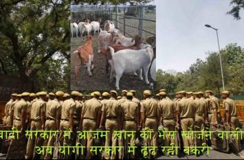 आजम खान की भैसों को खोजने वाली यूपी पुलिस अब इस जिले में खोज रही बकरी!