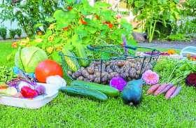 एमएचआरडी की गाइडलाइन,स्कूल कैंपस में होंगे न्यूट्रिशन गार्डन, उगाई जाएंगी सब्जियां