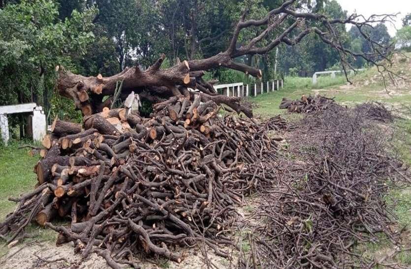 पर्यावरण की नाश लीला: हाईवे किनारे सैकड़ों साल पुराने हजारों पेड़ काट कर रोप रहे, शो प्लांट