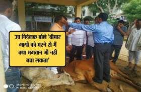 गायों के नाम पर केवल राजनीति, पांच डॉक्टर फिर भी पड़ रहे कीड़े