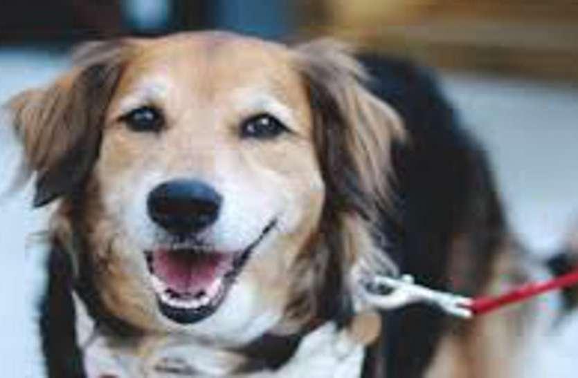 कुत्ता रखते हैं तो खबर पढ़ लें... जयपुर में इस कारण दर्ज हो रहे हैं पुलिस केस...