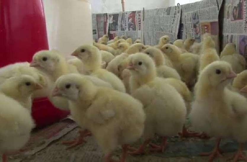 Build up india : पशुपालन विभाग175 हितग्राहियों को कराएगा मुर्गी पालन, प्रवासियों को मिलेगा रोजगार